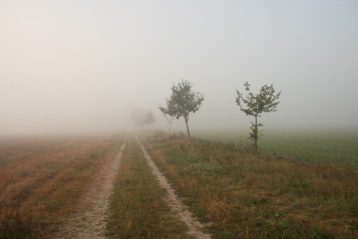 Foggy_Nature_Stock_Way_by_Ordinary_Stock pet
